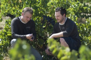 massena_vineyards