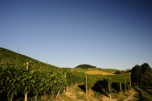 Ravera_vineyard_in_Novello