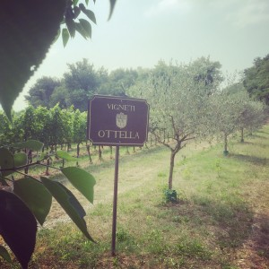 ottella_vineyards