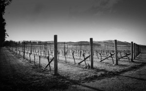 don_wines_alex_craighead_vineyards