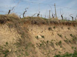 lerjord holder godt på vand og giver mørke saftige vine