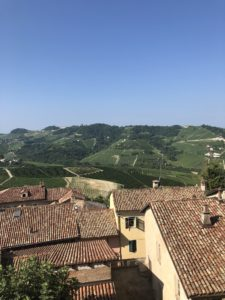 Barolo_vineyards