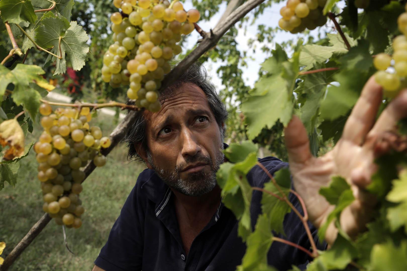 Naturvin – er det kommet for at blive?