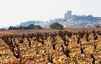 Vin og geologi