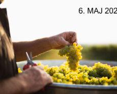 Smagning: Hvor står tysk Chardonnay?